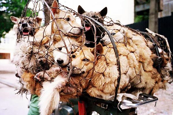 dogs-in-a-net