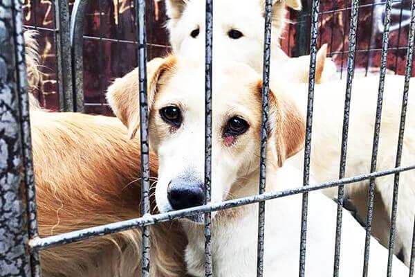 three-sad-dogs-in-cage